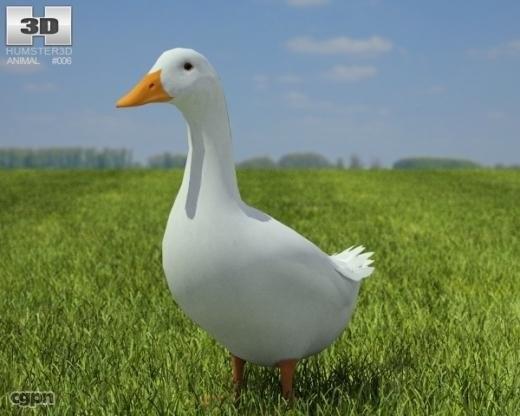 c4d duck pekin