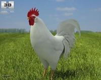 rooster leghorn 3d lwo