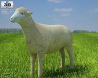 sheep max