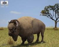 max bison american buffalo