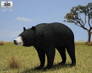 bear american black 3d model