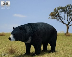 3d bear asian black
