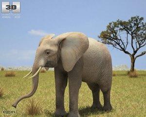 elephant african loxodonta 3d model