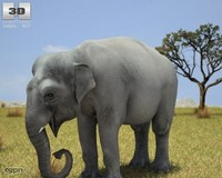 elephant asian elephas 3d max