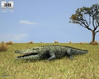 crocodile common crocodylus 3d obj