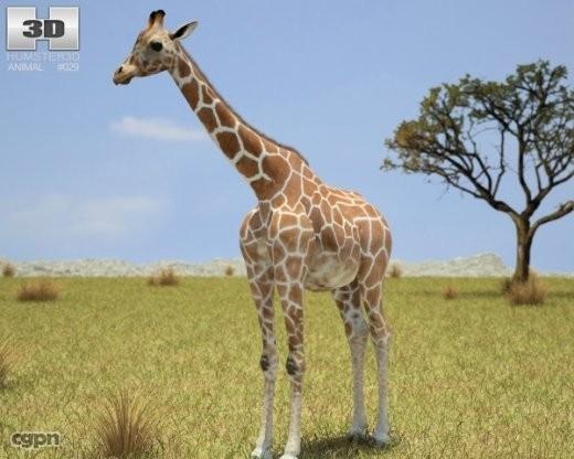 giraffe giraffa camelopardalis 3ds