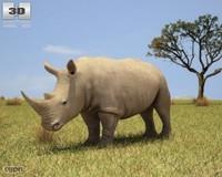 rhinoceros rhino white 3d max