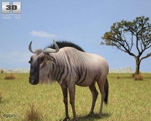 wildebeest connochaetes wild max