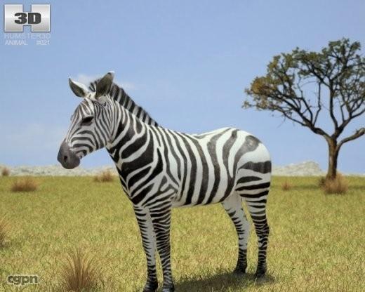 zebra hippotigris 3d 3ds