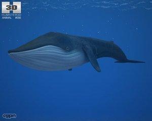 3d whale blue model