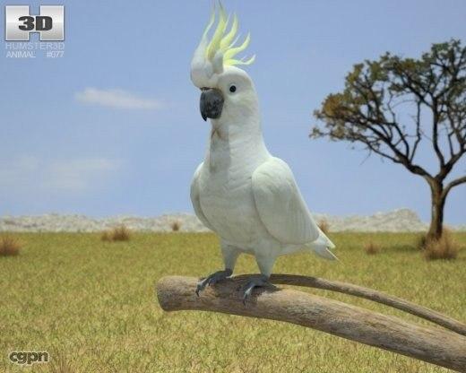 3d model of cockatoo cacatuidae