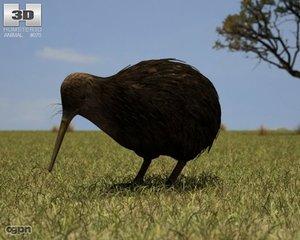 kiwi apteryx australis max