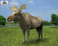 3d moose alces