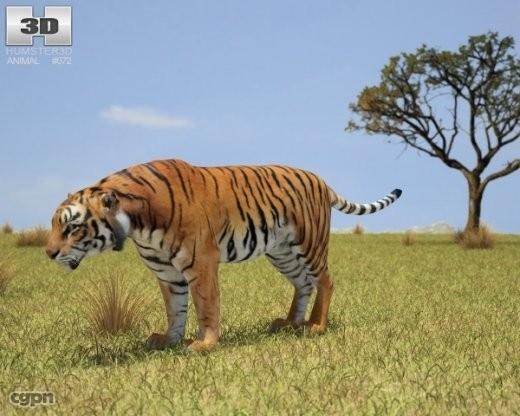 tiger panthera tigris 3d model