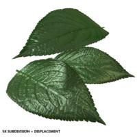 realistic leaf 3d model