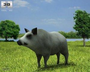 3d boar sus scrofa