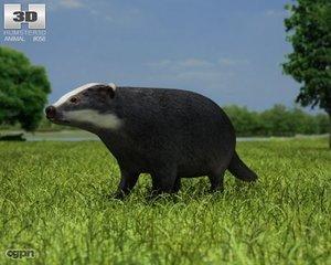 3d badger common meles