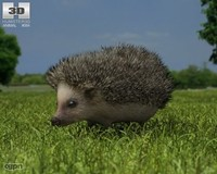 3d erinaceinae hedgehog model