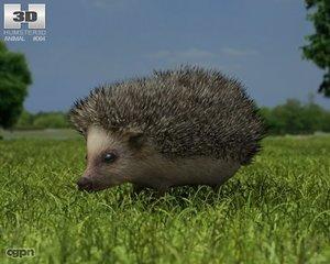 3d erinaceinae hedgehog model