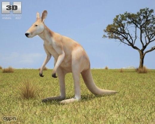 kangaroo macropus rufus 3d model