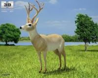 3d deer odocoileus virginianus