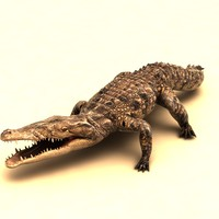 rigged crocodile 3d model