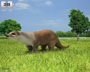 european otter lutra 3d model