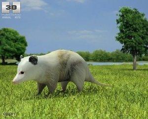 max didelphidae opossum