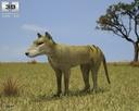 Thylacine 3D models