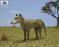 3d model of thylacine thylacinus cynocephalus