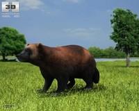 3d model gulo wolverine