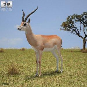 gazelle grant s 3d max