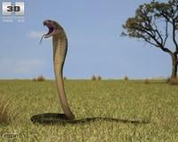 3d model cobra india indian