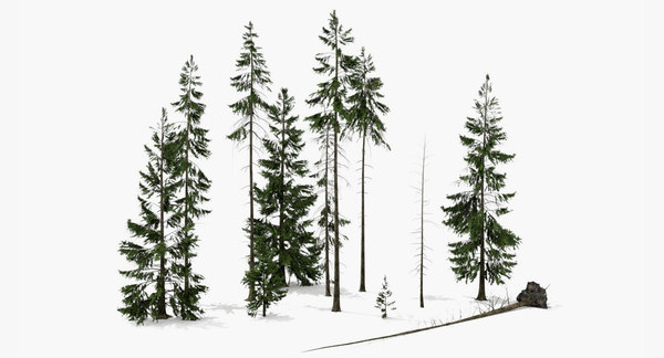 3d model of set spruce trees