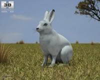 3d model arctic hare arcticus