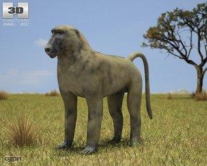 3d model baboon chacma papio