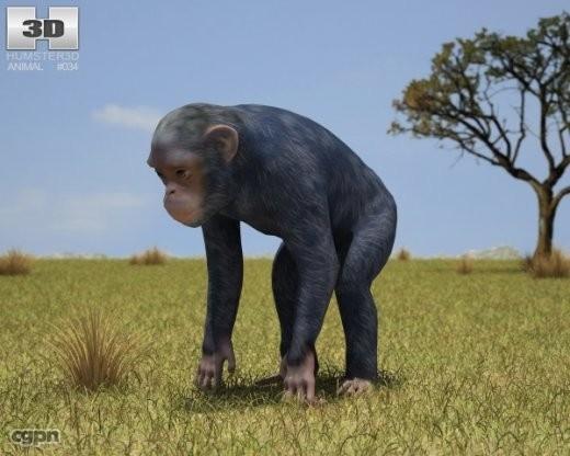 chimpanzee common pan 3d model