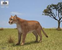 3d model cougar puma