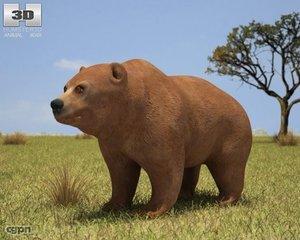 3d arctos bear grizzly model
