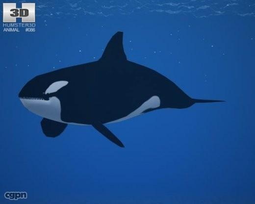killer whale 3ds