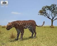3d max leopard panthera pardus