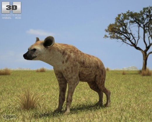 crocuta hyena spotted 3d 3ds