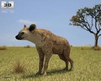 crocuta hyena spotted 3d 3ds