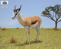 antidorcas marsupialis springbok 3d model