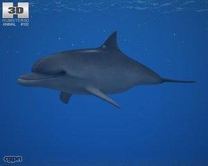 bottlenose dolphin common 3d model