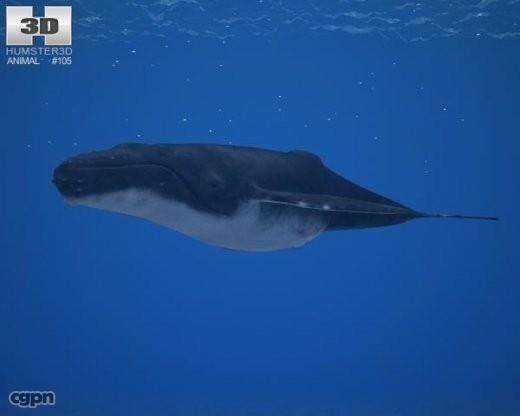 humpback whale megaptera 3d 3ds