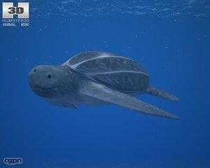 3d dermochelys coriacea leatherback model