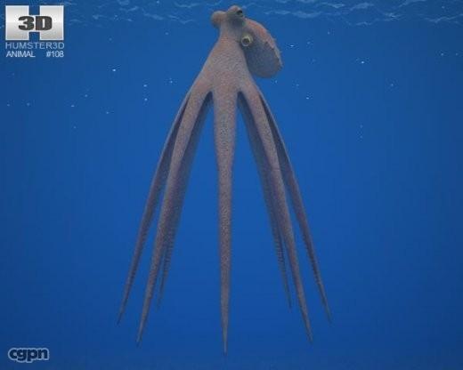 3d model of common octopus vulgaris