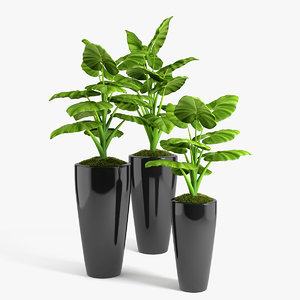 3d philodendron plants set model