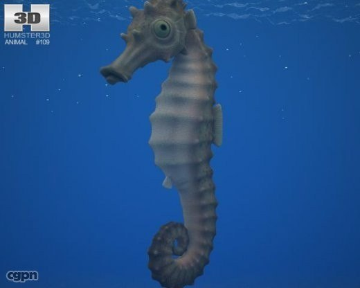 hippocampus kuda 3d model